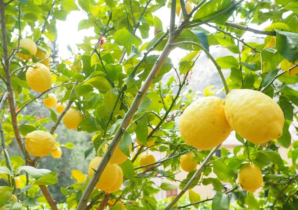 Growing Fruit Trees in Containers | GrassHoppers Alpena, MI